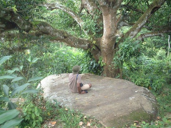 Eco Jungle Hideout: Bird watching