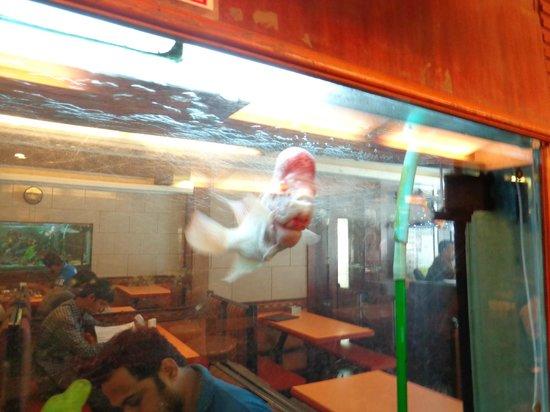 Pangat: Fish aquarium