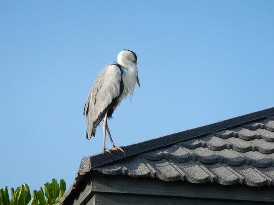 Kuredu Island Resort & Spa: Täglicher Begleiter