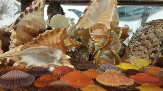 Bellview Shell Collection: Hidden Treasures