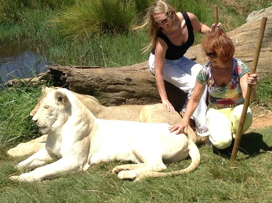 Botlierskop Private Game Reserve: Photo Op: Walking with the lions (guides were right there)