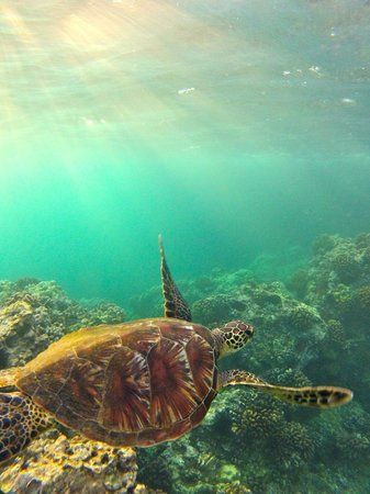 Kamaole Beach Park 3: The sea turtles were incredible to see every day