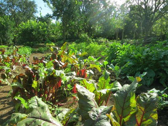 La Mariposa Spanish School and Eco Hotel : At Mariposa's organic farm--where some of your meals are born