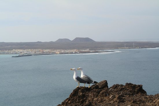 Isla de Lobos: view from the top of the volcano - Corralejo in the background