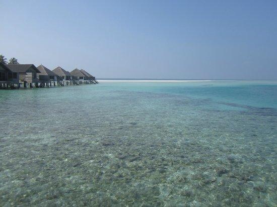 Gangehi Island Resort : Vista OverWater Deluxe