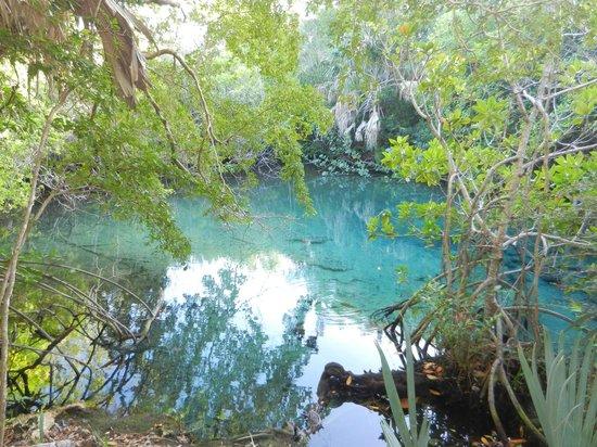 Parc écologique Indigenous Eyes : озеро в Indigenous Eyes