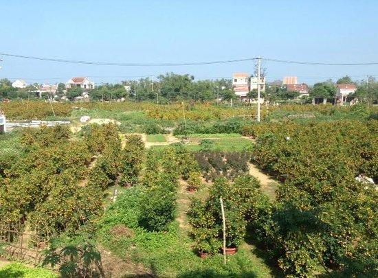Hoi An VIVA Homestay-Villa : our view