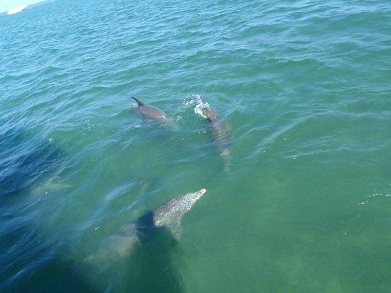 Dolphin Watch: in aller Ruhe tummeln sie sich neben dem Boot