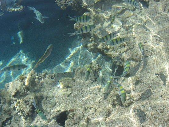 Port Ghalib Resort: риф захватывает дух