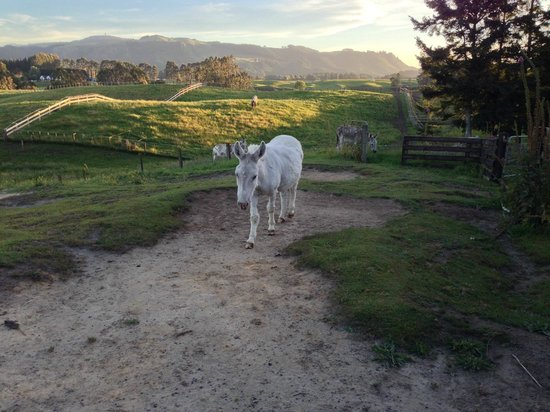 Doolan's Country Retreat : the 3 donkeys that Christine has