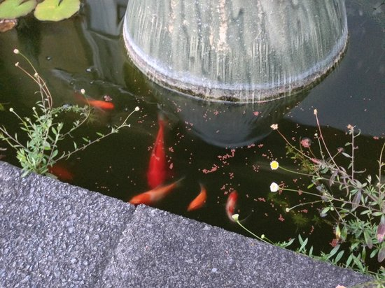 Doolan's Country Retreat : fishes around the house