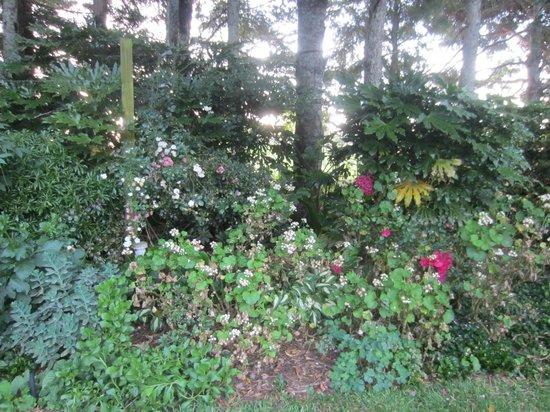 Doolan's Country Retreat : flowers around the premises