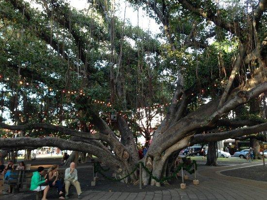 Banyan Tree Park : The magical Banyan tree