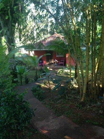 Monkey Lodge Panama: Cabin