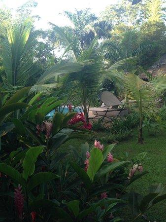 Monkey Lodge Panama : Swimmingpool