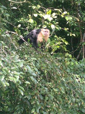 Monkey Lodge Panama : Swimming Pool