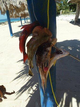 Ancon Beach: Fischers Fang