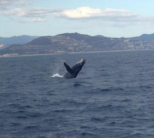 Blue Sky Cabo Fishing and Tours: Cabo whale watching