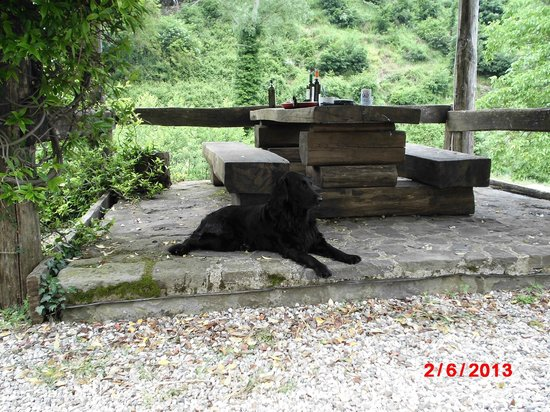 Agriturismo Barbicaio: our dog with the drinks