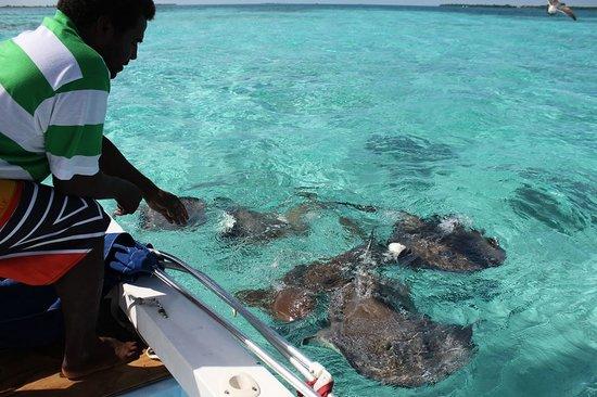 Caveman Snorkeling Tours, Caye Caulker, Belize cadleh@yahoo.com  (011)501-605-0345