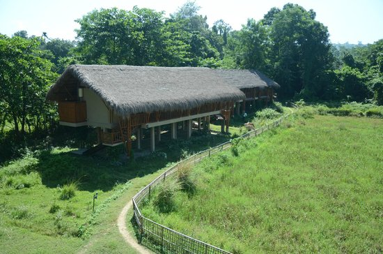 Diphlu River Lodge : The cottages