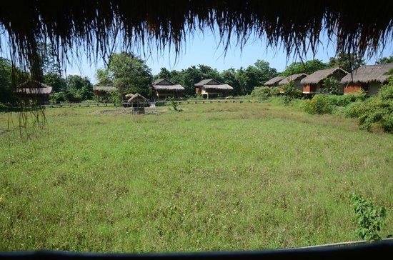 Diphlu River Lodge: Enjoy the greenery