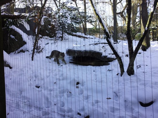 Bronx Zoo: Leopardo das Neves