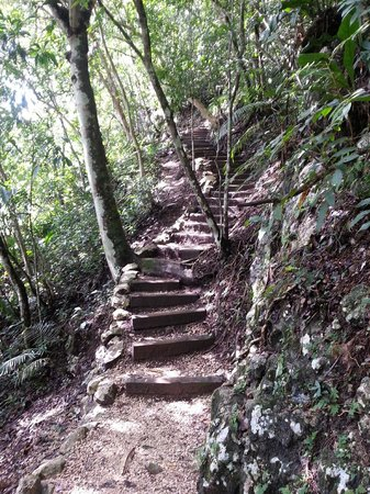 The Lodge at Chaa Creek: Jungle trail between camp and resort
