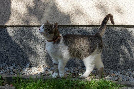 Family Pension: Хозяйский котик
