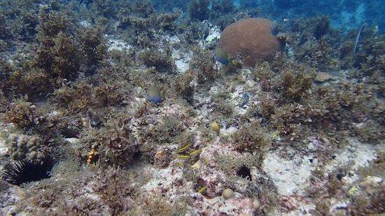 Samsara Cliffs Resort: Underwater pic #1.