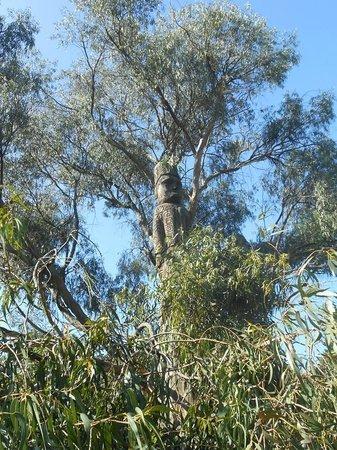 Parque El Ejido: árbol tallado