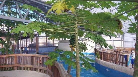 Schlitterbahn Beach Resort: Indoor water park
