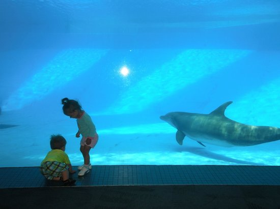 Texas State Aquarium: The whole wall is a viewing area into the dolphin tank