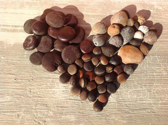 Mayan Beach Garden: A variety of sea beans found along the beach
