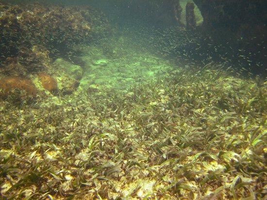 Mayan Beach Garden: thousands of tiny fish at the shipwreck