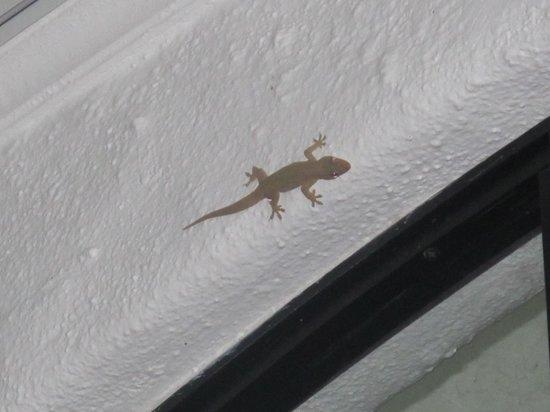La Mariposa Hotel : gecko lizard