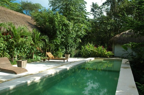 Piedra de Agua Palenque: pool and garden just outside our room