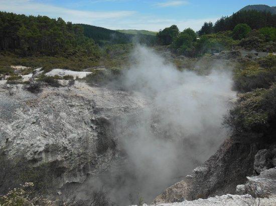 Regent of Rotorua: Geothermal Activity - Rotorua