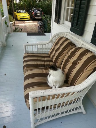 Feline.....Greetings.....as you enter.....The Gardens Hotel.....