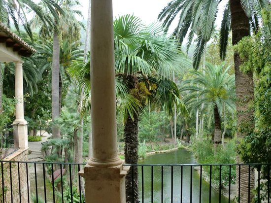 canary date palm and washingtonia palm - Picture of Jardins de Alfabia, Bunyo...
