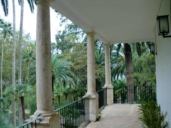 canary date palm and washingtonia palm - Изображение Jardins de Alfabia, Бунь...
