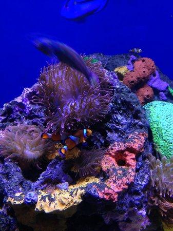 Eel Picture Of Audubon Aquarium Of The Americas New