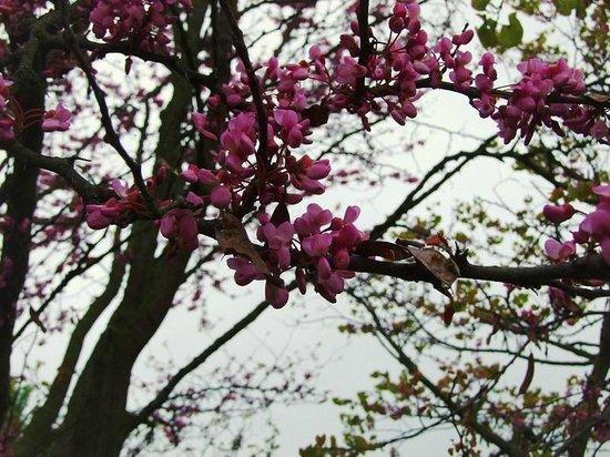 Villaggio Turistico Lugana Marina: Весна
