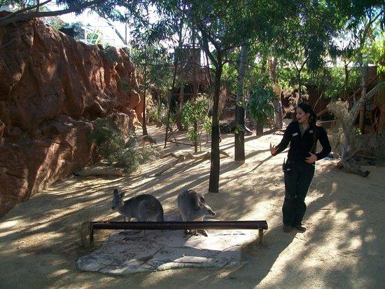 Wild Life Sydney Zoo: presentation talk