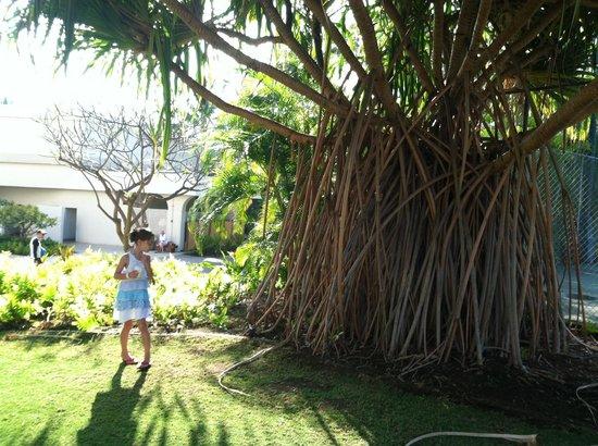 Sheraton Kona Resort & Spa at Keauhou Bay: Walkway near the tennis court