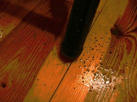 Quinta dos Machados : formigas