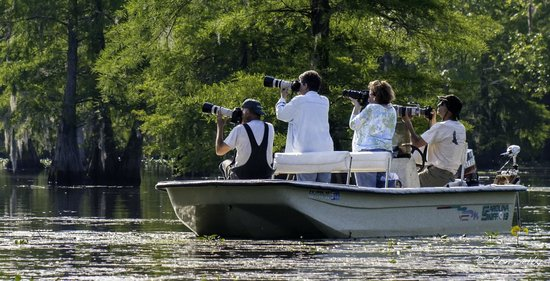 Lowcountry Wildlife Photo Safaris - Day Tours