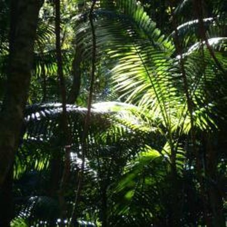 Beachside Motor Inn: Rain Forest Fraser Island