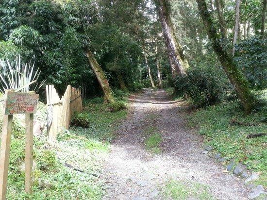 Finca Dracula: path