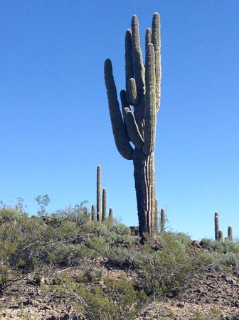 Flying E Ranch : Cactus view from horseback ride
